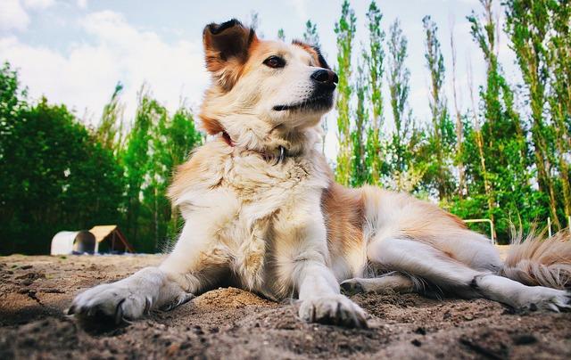 Odszkodowanie za pogryzienie przez psa w gospodarstwie rolnym